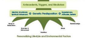 Functional-Medicine-Tree-Low